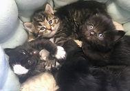 Kittens 2021 10 KH.jpg