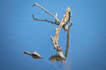 20062315 Blanding's Turtle.jpg