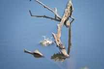 20062301 Blanding's Turtles.jpg