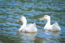 20051428 Ducks.jpg