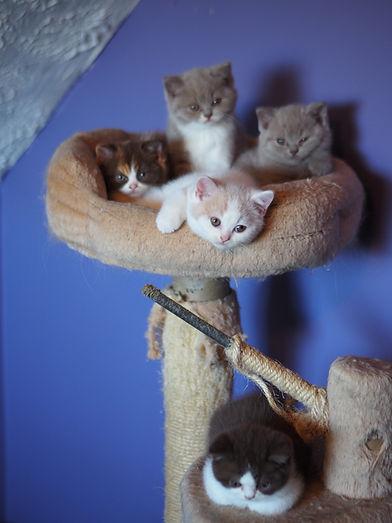 TM 2020 65 Kittens 5w.jpg