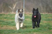 Rocco & Raquel 4m