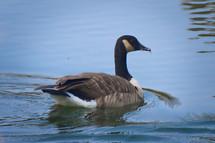 20100908 Goose.jpg
