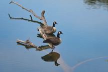 20100903 Geese.jpg