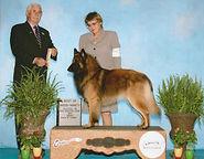 2007 Axel BISS Ch Axel du voie de Louve