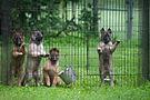 GW 2018 Puppies 10w 18081111 GW Kalypso