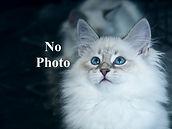 No Photo Cat.jpg