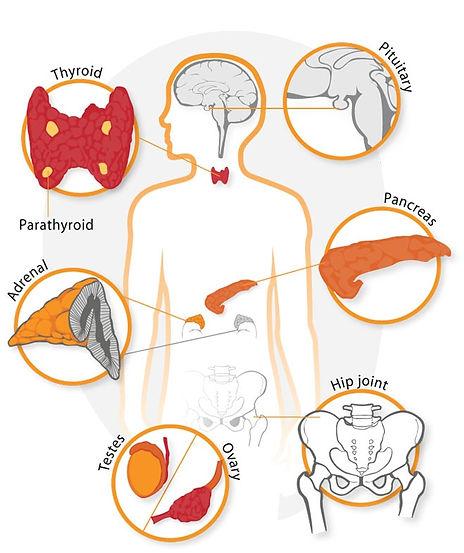endocrinologia3.jpg
