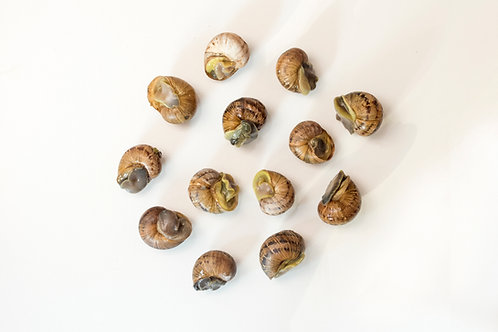 Peconic Escargot - In Shell - 1 Dozen (12 pcs) - Fresh