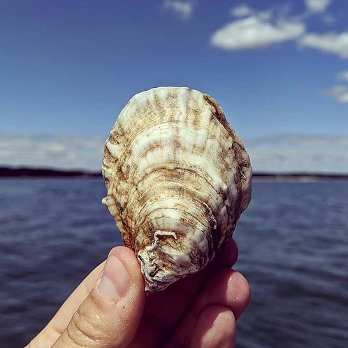 Hampton Oyster Company - 2 Dozen Oysters