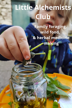Family foraging, wild food and herbal medicine.  Online and inperson courses