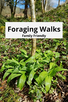 foraging and wild food walks, family friendly