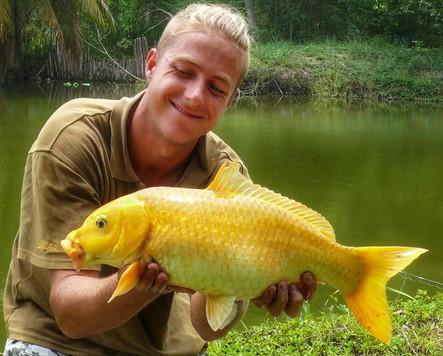 Koi Carp Mekong fishing at Greenfield Valley Fishing Resort, Hua Hin, Thailand