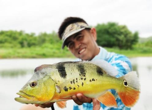 Peacock Bass fishing at Greenfield Valley Fishing Resort, Hua Hin, Thailand