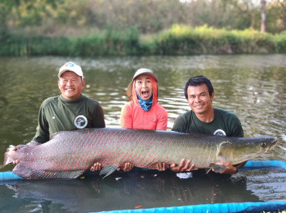 Arapaima fishing at Greenfield Valley Fishing Resort