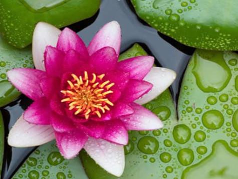 Domenica 27 Ottobre - Ayurveda, la Conoscenza della Vita