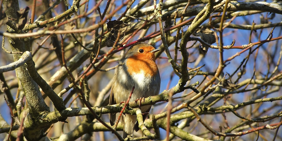 Whose Singing From Your Rooftop? ... An Introduction to Birdsong with Tom Forward
