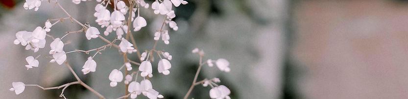 littel pink flower