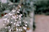 木に咲く桜色の花