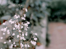 Blumen-Anlage