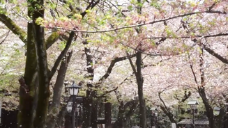 2017 Japan Trip