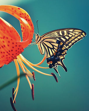 âme-papillon.jpg