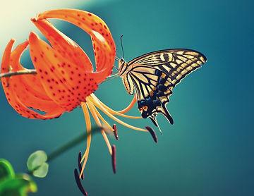 âme papillon.jpg