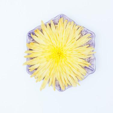 platos y flores 4
