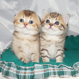 Cassie and Cherri