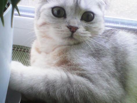 Ch. Violetta Angelica Cats в ожидании аиста.