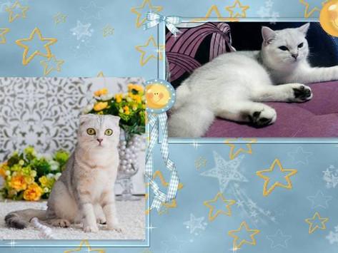 Violetta Angelica Cats в очередной раз стала мамой!