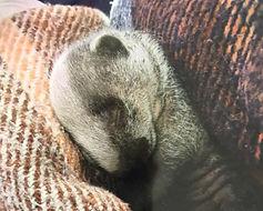 badger warm_edited.jpg