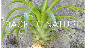 DJ A - Back to Nature #2
