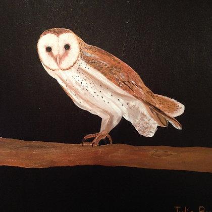 Barnie the Owl- Acrylic on wrapped canvas