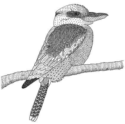 Kookaburra - Unframed Print