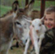 Screenshot-2019-1-16 Our Goats Bluestone