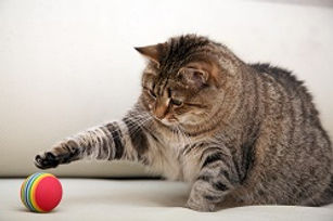 Cat-playing-with-a-bal.jpg