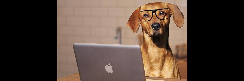 Dog at computer fixed.png