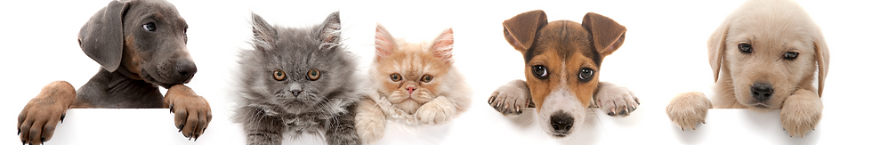 strip pup and kitten.png