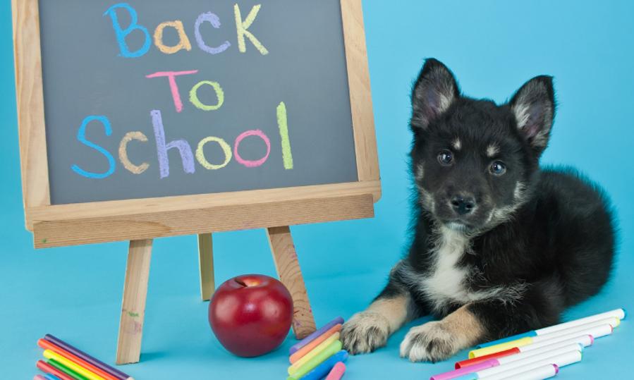 puppy preschool.png