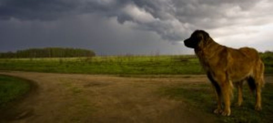 dog looking into storm.jpg
