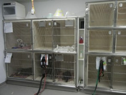 Dog-ward-1-300x225.jpg