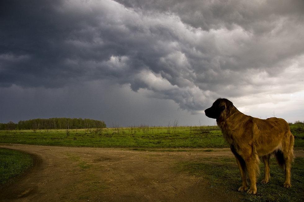 Storm behaviour.jpg