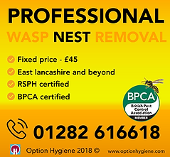 Wasp Nest Removal AD.png