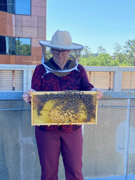 Earth Day Bee Instalation