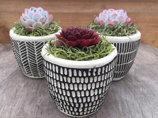 Scandi Three Pot Succulent Pack