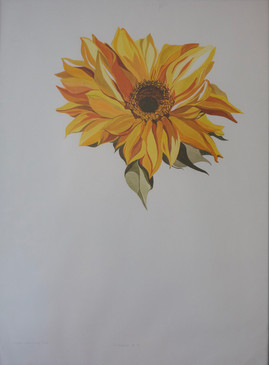 Sunflower #6