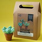 succulent kit horizontal_1000.jpg