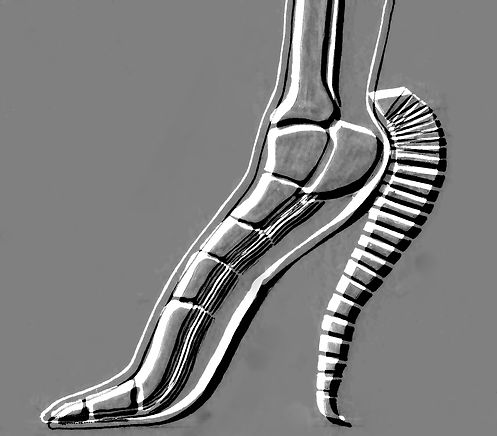 shoe spine emboss.jpg