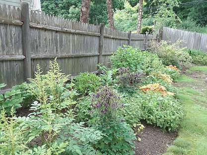 Bhatt side garden 1 year.jpg